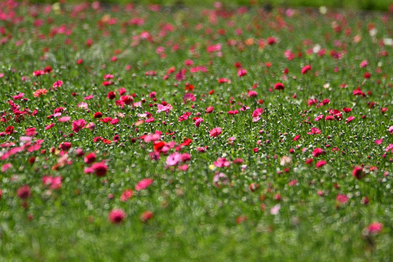 פריחת האביב בעמק החולה